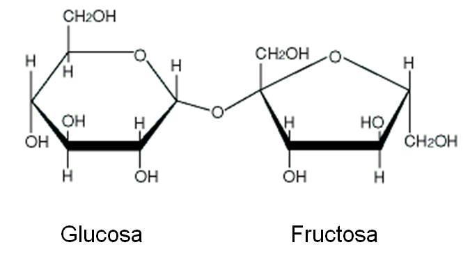 7 3 Biomoléculas Química General
